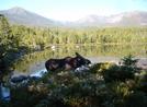 Katahdin Moose by TJ aka Teej in Moose