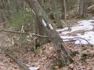 Idiot's Corner, Delaware Water Gap by Second Half in Trail & Blazes in Maryland & Pennsylvania
