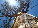 Awesome by shaman.in.a.yurt in Other Trails
