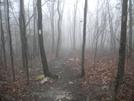 April 2010 by Joey C in Trail & Blazes in Virginia & West Virginia
