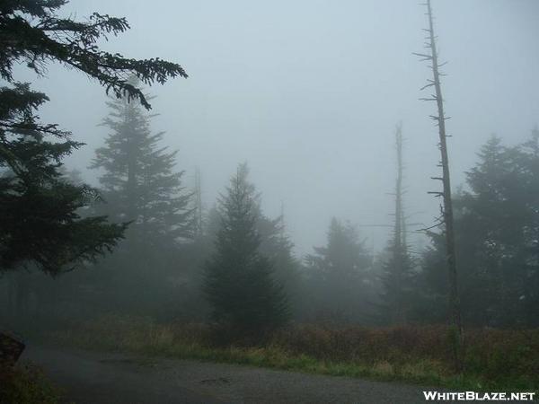 Fog at Clingman Dome