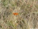 Butterfly on Rockytop by grrickar in Other