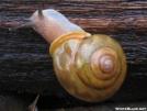 Snail Hiker by grrickar in Other