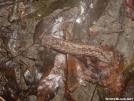 Ultralight Snail Hiker by grrickar in Other