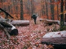 Smoky Mountains Fall Hike by newspix1 in Section Hikers
