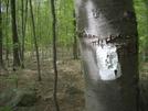 Nj White Blaze by Accorn in Trail & Blazes in New Jersey & New York