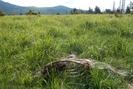 Fallen Horse