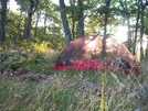 Home @ Spy Rock by k.reynolds70 in Trail & Blazes in Virginia & West Virginia