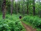 Photo Along Georgia Trail by Lexi1987 in Trail & Blazes in Georgia