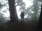 Woody Gap After Rain by Lexi1987 in Trail & Blazes in Georgia