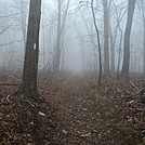Silence of the early morning Fog by 2 Dogs in Section Hikers