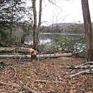 Beaver activity Finerty Pond