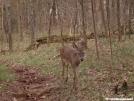 deer picture by neo in Deer
