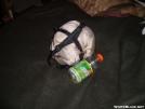 budget hammock gear1