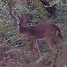 deer 2 by no-name in Deer