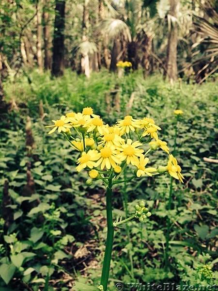 Wildflowers at Jim Creek
