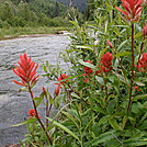 Indian Paintbrush by coach lou in Flowers