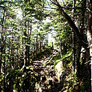 Lots of cool trail by coach lou in Trail & Blazes in New Hampshire
