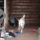 Nara and Dog Whisperer