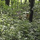 Fauna by coach lou in Deer