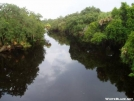 Looking Down Stream Myakka River by Catsgoing in Other Galleries