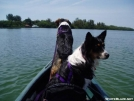 The Green Torpeado Kayak by Catsgoing in Other Galleries