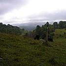 Cows by rmitchell in Trail & Blazes in Virginia & West Virginia