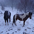 Ponies near Mount Rogers by kk1dot3 in Trail & Blazes in Virginia & West Virginia