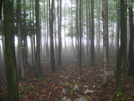 Misty Forest Outside Of Palmerton by augie in Views in Maryland & Pennsylvania