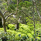 AT Prep Hike: Aiea Loop Trail, Oahu, 4.8 mi by DonnaVO in Other Trails