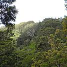 AT Prep: Aiea Loop Trail, Part II