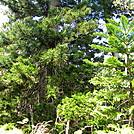 AT Prep: Aiea Loop Trail, Part III/End