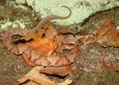 Copperhead by Herpn in Snakes