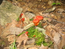 Little Mushrooms by Tractor in Views in New Jersey & New York