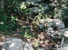 Virginia Rattlesnake-2