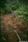 Moose poop all over trail by DebW in Moose