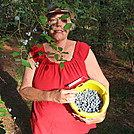 Cathy in blueberry patch by Cat in the hat in Members gallery