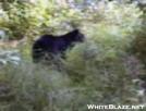 Bear on NCT