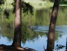 Ducks by backpackingdduo in Birds