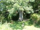 2006 Section Hike - Keifer's Oak by Fat Man Walking in Trail & Blazes in Virginia & West Virginia