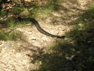 2008 Section Hike - My Hiking Partner For The Day by Fat Man Walking in Snakes
