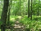 2008 Section Hike - A Walk In The Ferns Near Fish Hatchery Road Va by Fat Man Walking in Virginia & West Virginia Trail Towns