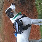 Testing Ezydog Summit Backpack by Equi_Sally in Other