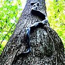 Black Snake Climbing An Oak by Puma Ghostwalker in Snakes