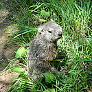 Reginald Woodchuck Was Well Liked and Liked To Be Called Reggie.