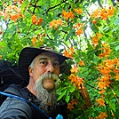 Flame Azaleas and Red Rubies….Of the Appalachian Trail.. by Puma Ghostwalker in Flowers