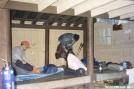 Gravel Springs Shelter by trailfinder in Virginia & West Virginia Shelters