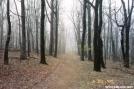 Early Morning around Thornton Gap by trailfinder in Trail & Blazes in Virginia & West Virginia