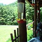 Hummingbird fuel by Brently in Hostels