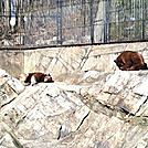 Bears in the Bear Mountain Zoo!
